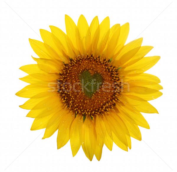 Sunflower with heart in center  Stock photo © dashapetrenko
