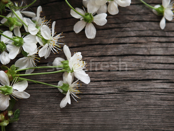 Stock photo: Spring blossom cherry flowers