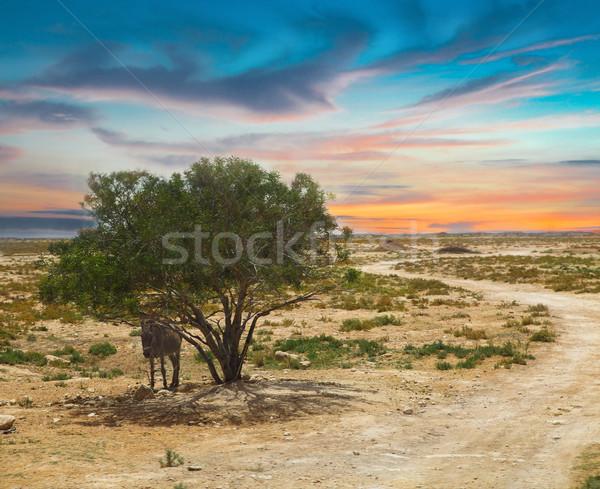 Paisagem solitário árvore burro textura natureza Foto stock © dashapetrenko
