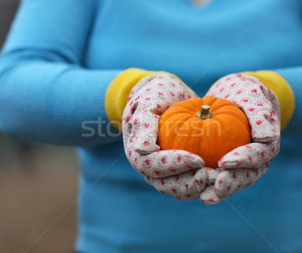 Woman wearing gloves holding orange pumpkin  Stock photo © dashapetrenko