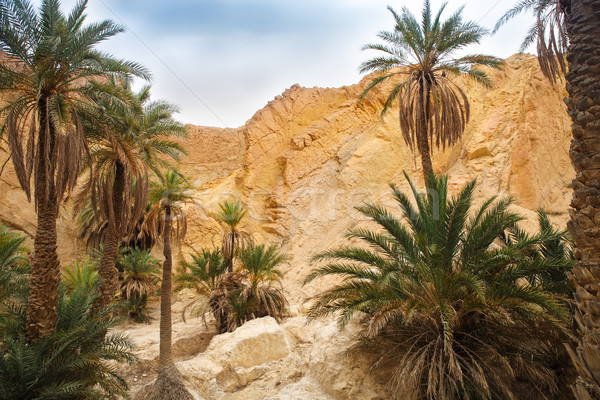 View of mountain oasis Chebika, Sahara desert, Tunisia Stock photo © dashapetrenko