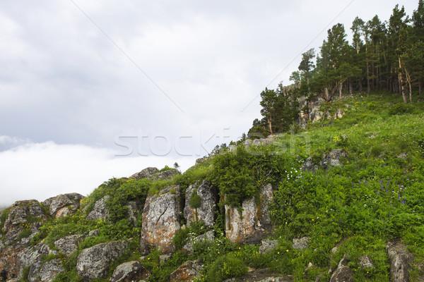 Hegy Kaukázus Oroszország virág fű erdő Stock fotó © dashapetrenko