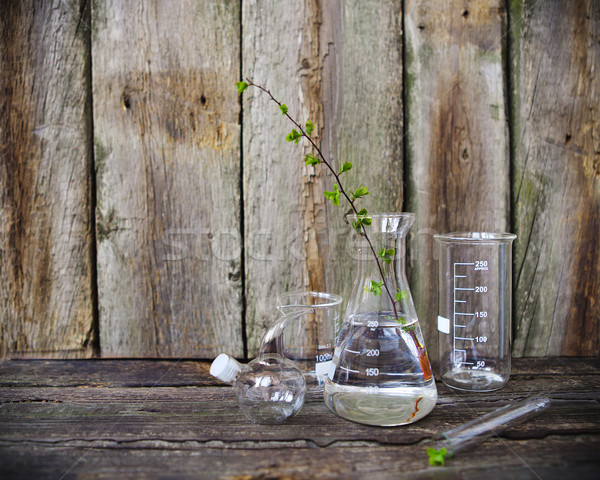 Stock photo: Green plants in laboratory equipment