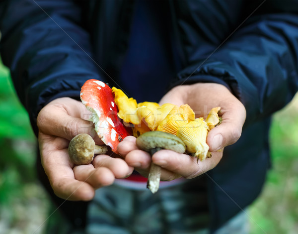 Mushrooms in a hands of a man Stock photo © dashapetrenko