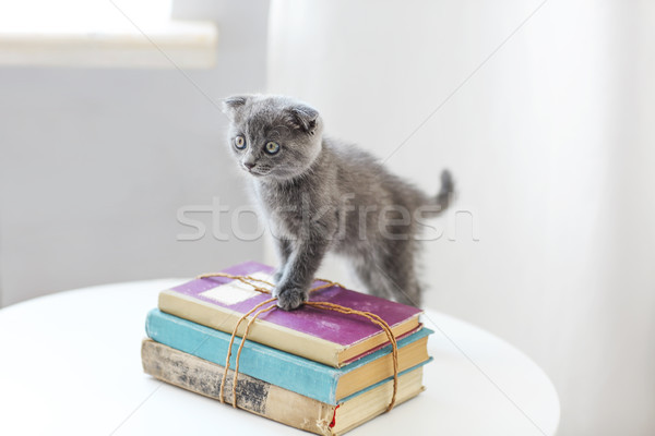 Lovely grey scotish kitten sitting on the pile of books in the l Stock photo © dashapetrenko