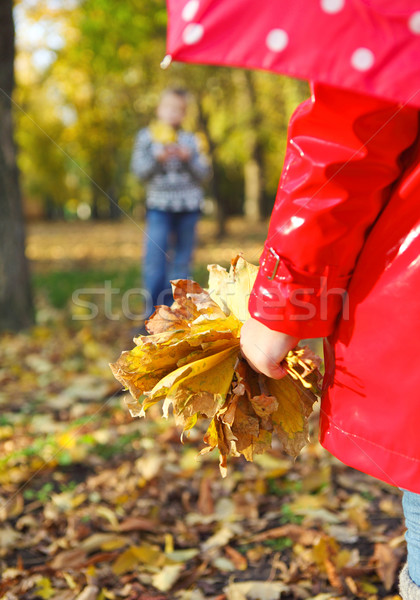 little girl with autumn leaves in the beauty park Stock photo © dashapetrenko