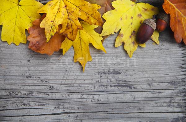 Sonbahar akçaağaç meşe yaprakları ahşap dizayn Stok fotoğraf © dashapetrenko