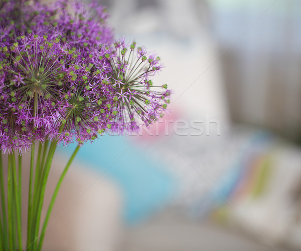 Chinese Chive  Stock photo © dashapetrenko