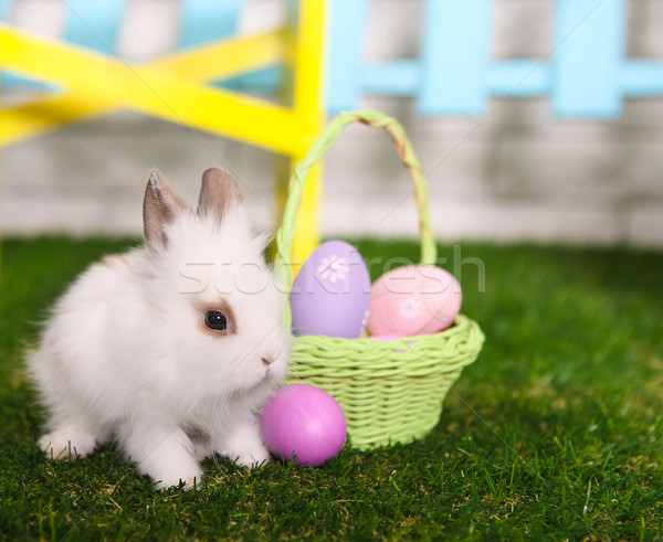 Stock photo: Little white rabbit and easter eggs in green grass