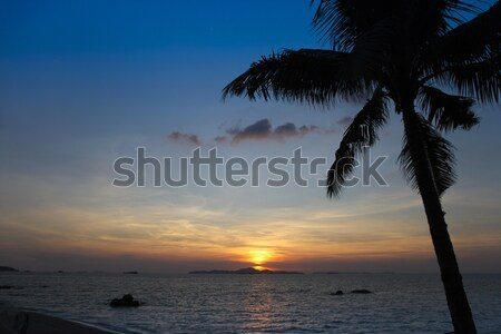 Palmiye ağaçları siluet gün batımı Tayland su ağaç Stok fotoğraf © dashapetrenko