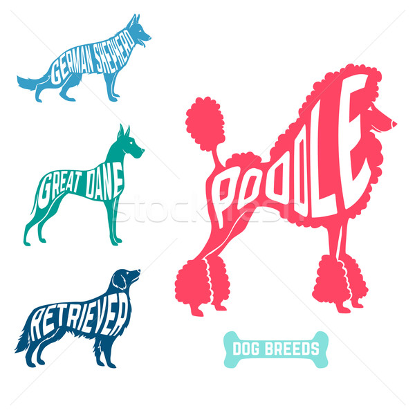 Set of dog breeds silhouettes text inside. Poodle and great dane with retriever, german shepherd Stock photo © Dashikka