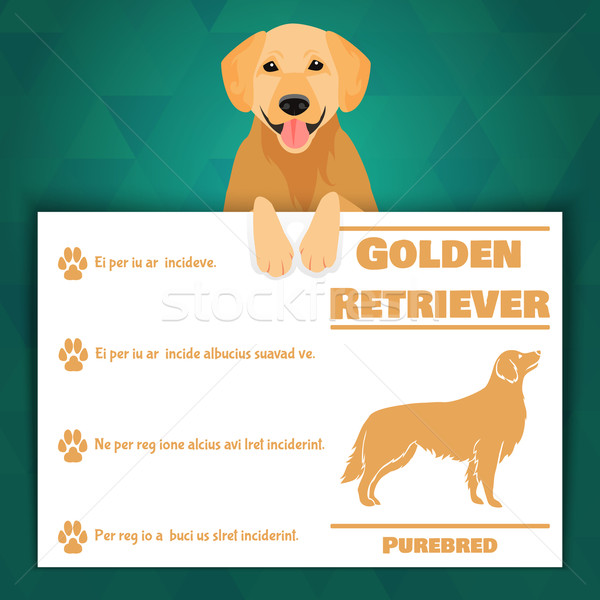 Golden retriever hond banner ras tekst teken Stockfoto © Dashikka