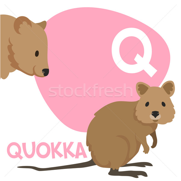 Funny cartoon animals vector alphabet letter set for kids. Q is Quokka   Stock photo © Dashikka