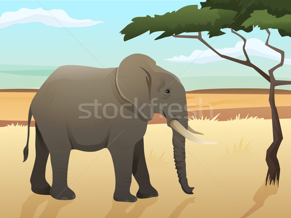 Beautiful wild african animal illustration. Big Elephant standing on the grass with savannah and tre Stock photo © Dashikka