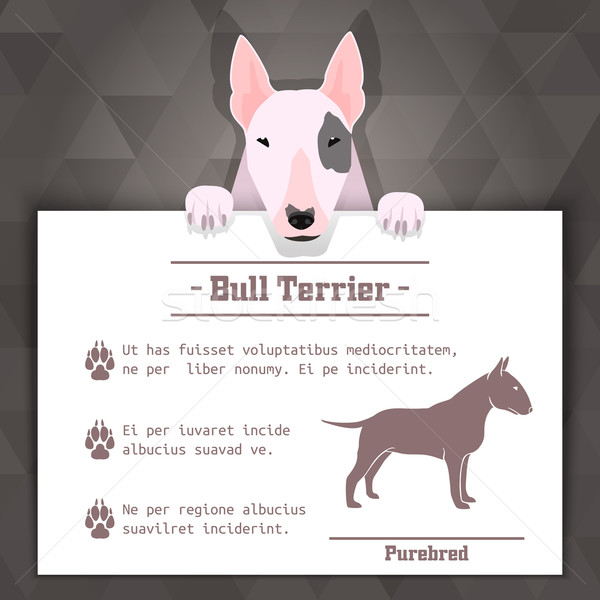 Stock photo: bull terrier dog banner