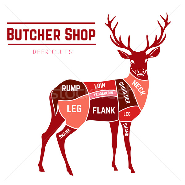 Deer meat cuts in color Stock photo © Dashikka