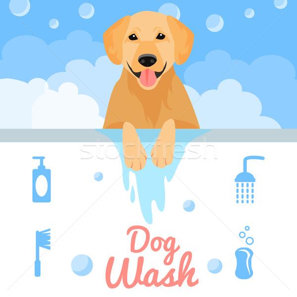 собака мыть стиральные ванны воды здоровья Сток-фото © Dashikka