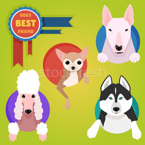 Stock fotó: Szett · különböző · kutya · husky · uszkár · internet