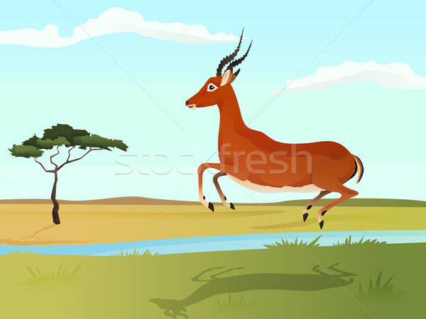 Beautiful wild african animal illustration. Antelope impala jumping on the grass with african savann Stock photo © Dashikka