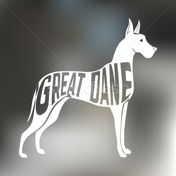 Creative design of great dane breed dog silhouette on colorful blurred background.  Stock photo © Dashikka