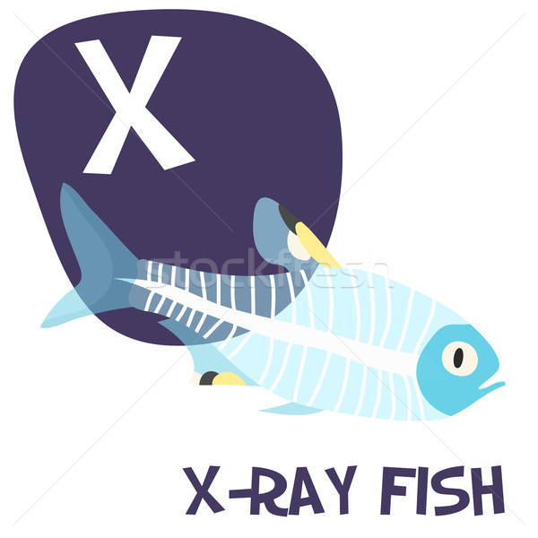 Funny cartoon animals vector alphabet letter set for kids. X is x-ray fish  Stock photo © Dashikka