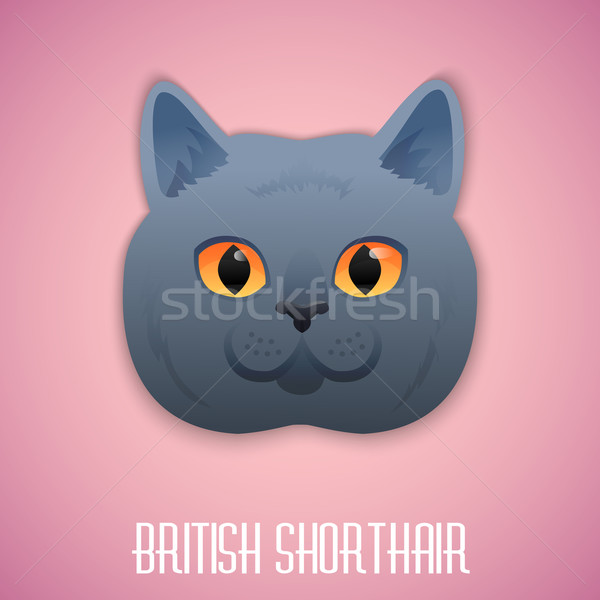 ritish Shorthair blue cat with orange eyes on pink background Stock photo © Dashikka