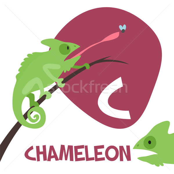 Funny cartoon animals vector alphabet letter set for kids. C is Chameleon   Stock photo © Dashikka