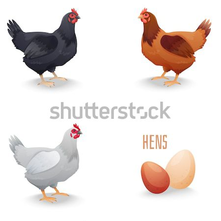 Realistic Hens in different breeds and eggs Stock photo © Dashikka