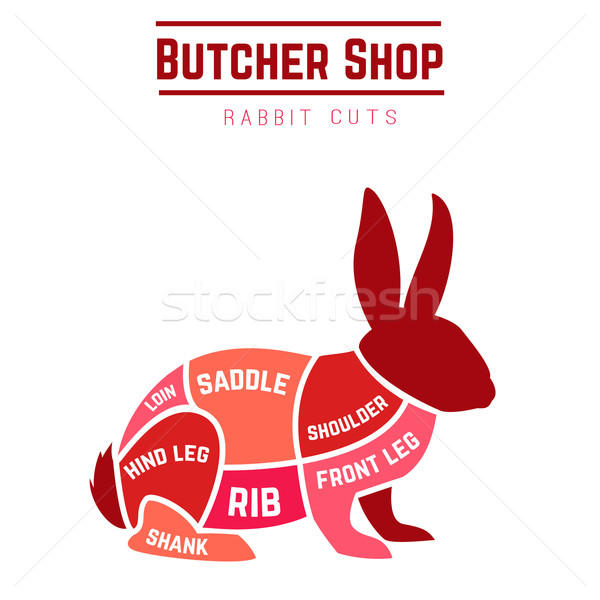Tavşan diyagram kasap alışveriş gıda restoran Stok fotoğraf © Dashikka