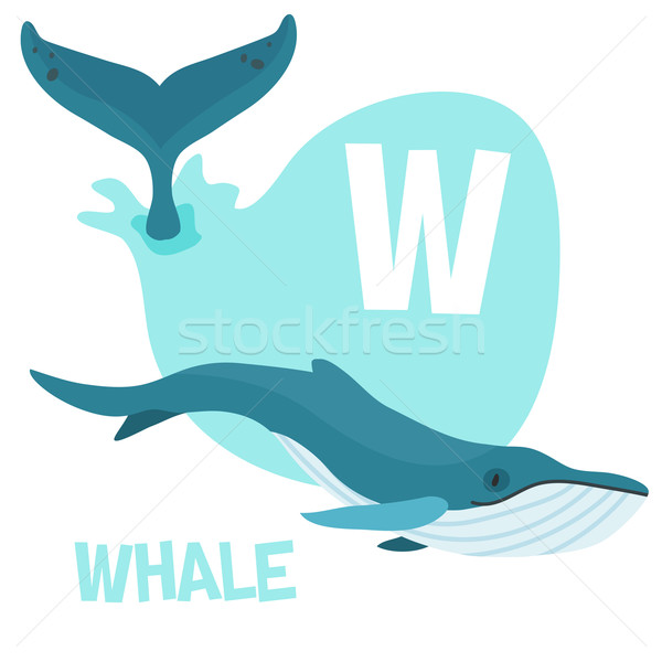 Funny cartoon animals vector alphabet letter set for kids. W is Whale Stock photo © Dashikka