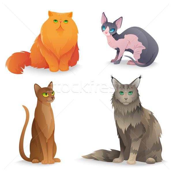 кошки набор различный роскошь лице дизайна Сток-фото © Dashikka