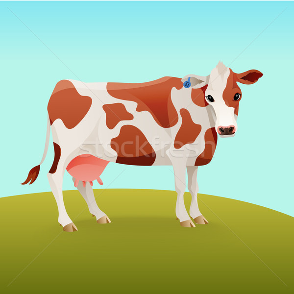 Brown and white spotted cow Stock photo © Dashikka