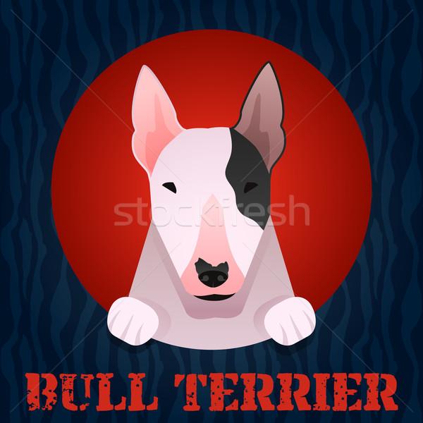 Bull terrier Stock photo © Dashikka
