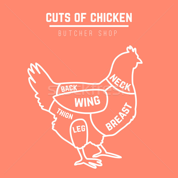 Chicken cuts butcher diagram Stock photo © Dashikka