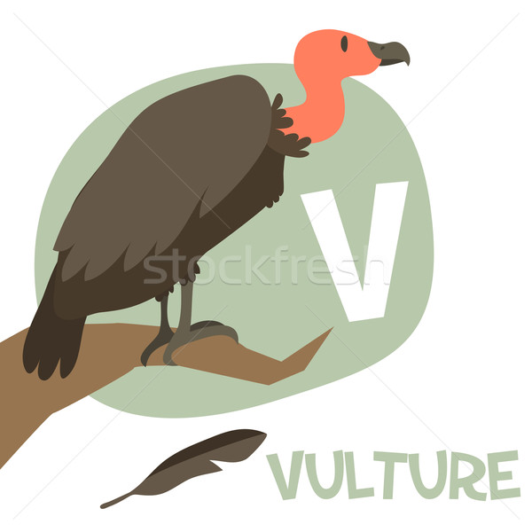 Funny cartoon animals vector alphabet letter set for kids. V is Vulture   Stock photo © Dashikka