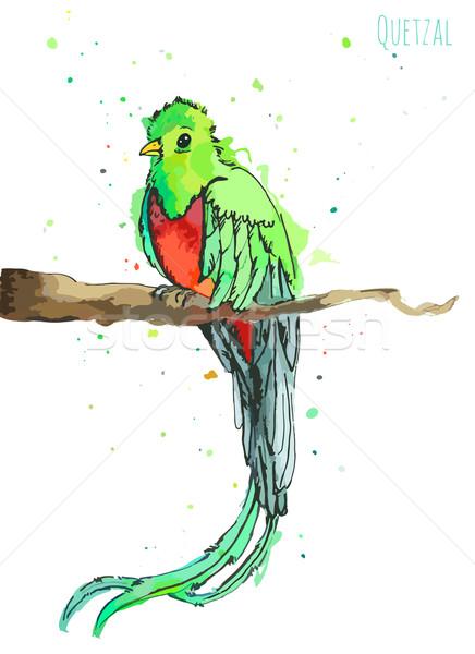 Suluboya yeşil kuş uzun kuyruk beyaz Stok fotoğraf © Dashikka