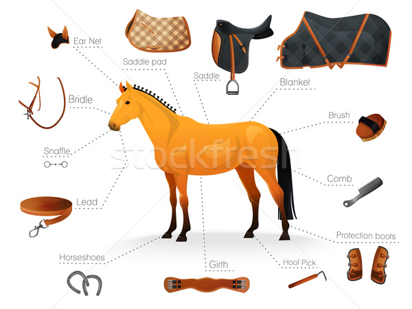 Set of equestrian equipment for horse. Stock photo © Dashikka