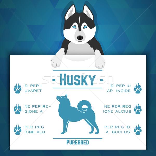 Husky собака баннер текста бумаги Сток-фото © Dashikka