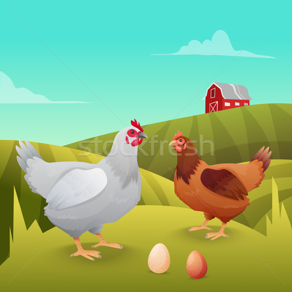 Hens standing on grass with farm background Stock photo © Dashikka