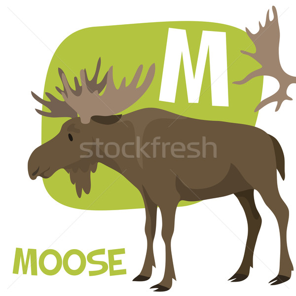 Funny cartoon animals vector alphabet letter set for kids. M is Moose. Stock photo © Dashikka