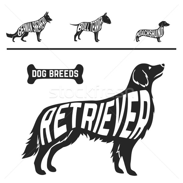 Set of different dog breeds silhouettes isolated black on white background Stock photo © Dashikka