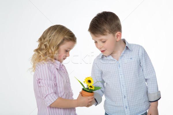 Dostluk büyüyen erkek çocuk sarı ayçiçeği Stok fotoğraf © Dave_pot