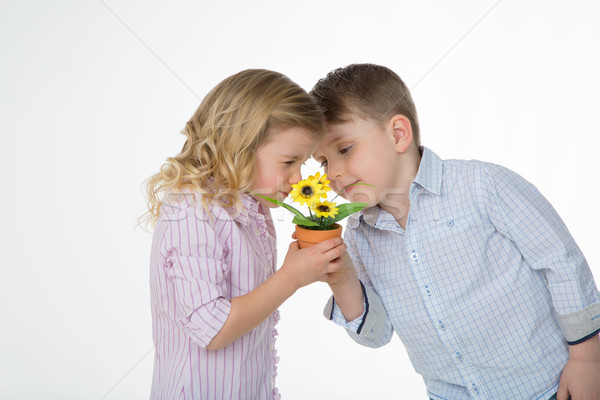 couple of kid holding a small plant Stock photo © Dave_pot