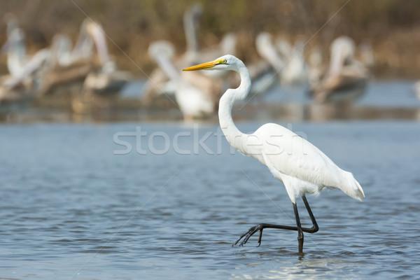 Groot witte verleden natuur lopen mooie Stockfoto © davemontreuil
