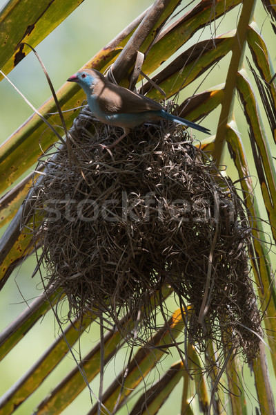 женщины природы лист Palm птица Сток-фото © davemontreuil