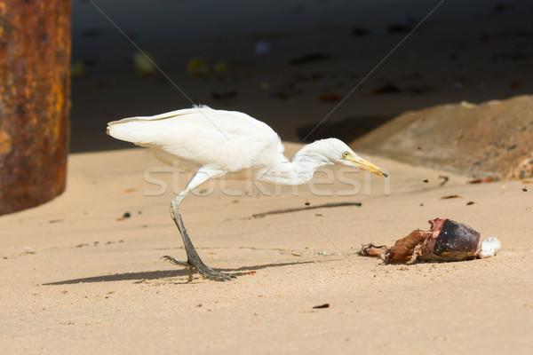Vee eten vliegen jacht vis vogel Stockfoto © davemontreuil