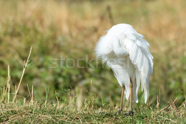翼 鳥 プロファイル 美しい いい かなり ストックフォト © davemontreuil