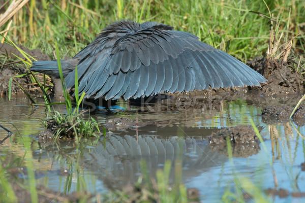Fekete klasszikus esernyő vadászat pozició szárnyak Stock fotó © davemontreuil