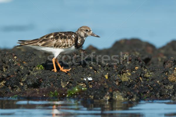 Permanent roches faible marée eau océan Photo stock © davemontreuil