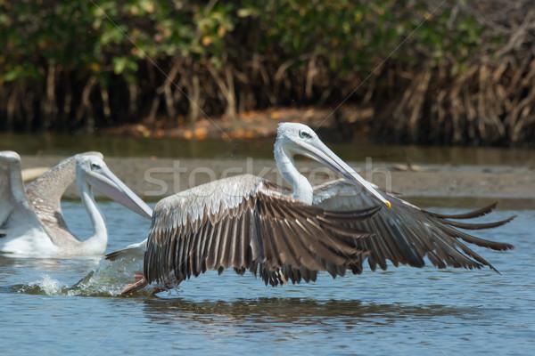 Ar peixe água pássaro África Foto stock © davemontreuil